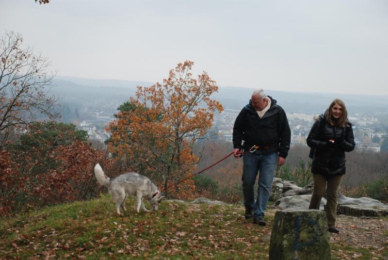 Balade et pic nic en foret de fontainebleau le 21 Novembre 2010 - Page 5 Dsc_0613