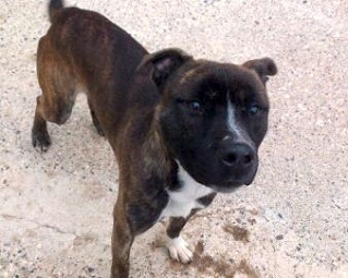 Meet Stanley looking for rescue SAFE Stanle10