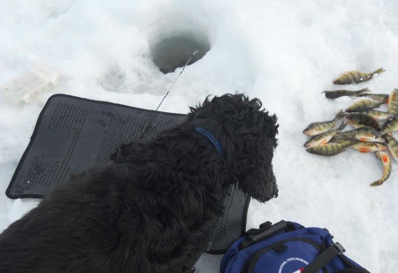 Sortie de pêche - Baie McLaurin/Gatineau - 26 février 2013 310
