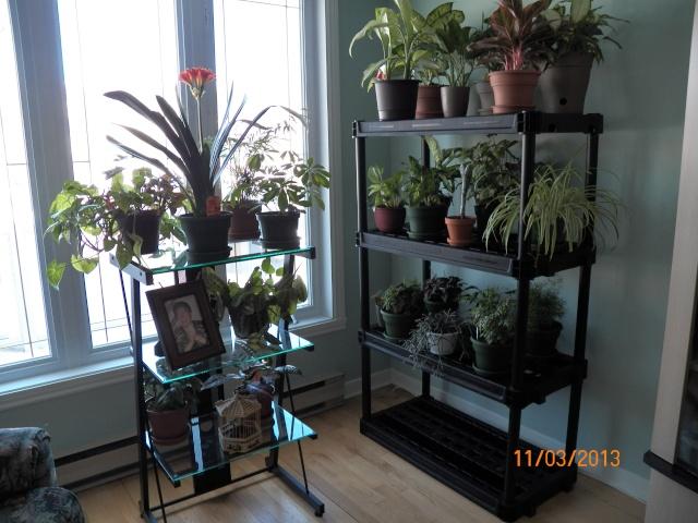 Voici mes deux étagères pour mes plantes !!! 100_0210