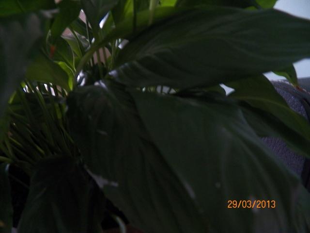 J'ai un problème avec cette plante !!! 100_0311