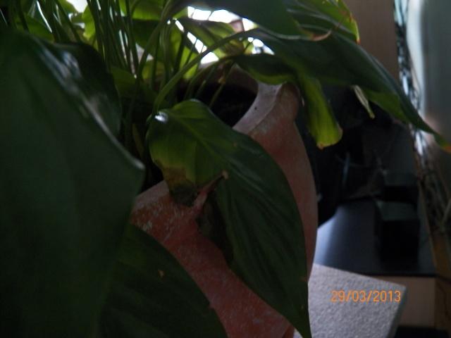 J'ai un problème avec cette plante !!! 100_0313