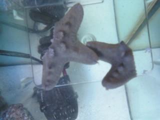 I cut my starfish in half!!!!!! :-) 11040011