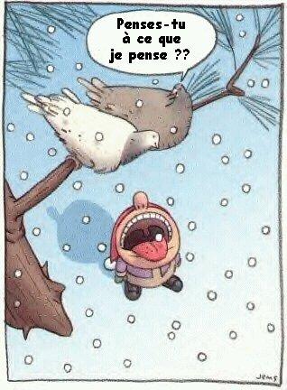 Racontez vos drôles de Blagues! (Plaisanteries,Jokes) - Page 6 Snowdr10