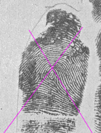 X - WALT DISNEY - One of his fingerprints shows an unusual characteristic! - Page 20 Angle_10