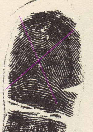X - WALT DISNEY - One of his fingerprints shows an unusual characteristic! - Page 20 Angle_11