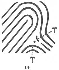 X - WALT DISNEY - One of his fingerprints shows an unusual characteristic! - Page 15 Fig01410