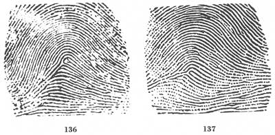 X - WALT DISNEY - One of his fingerprints shows an unusual characteristic! - Page 17 Fig13611