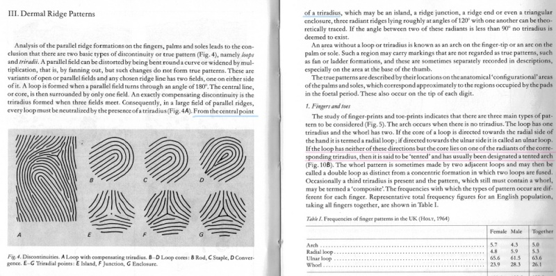 X - WALT DISNEY - One of his fingerprints shows an unusual characteristic! - Page 22 Should26