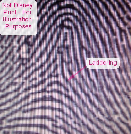 X - WALT DISNEY - One of his fingerprints shows an unusual characteristic! - Page 19 Tented15