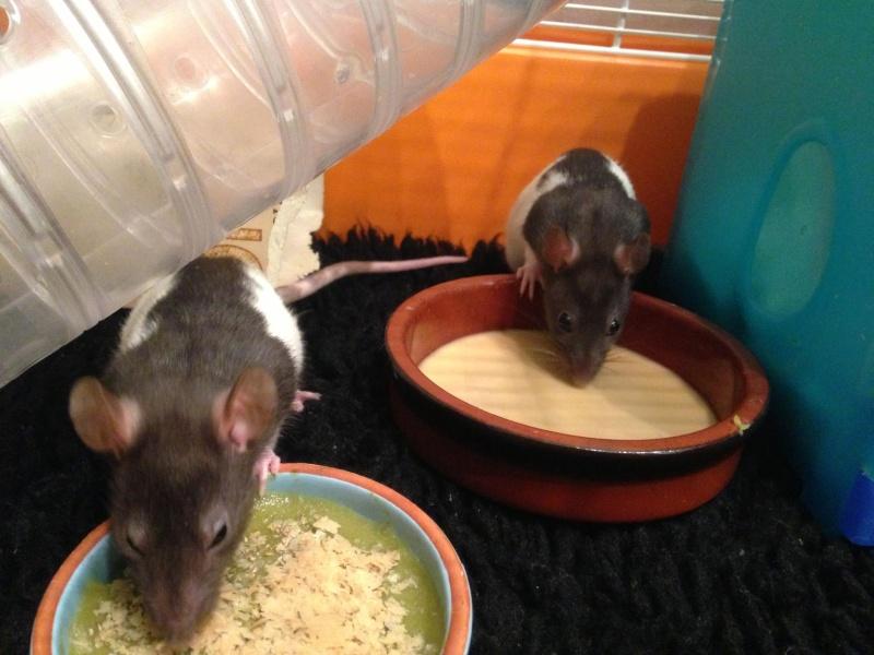 [75 et RP] 2 ratons hooded standard lisse noir 85761010