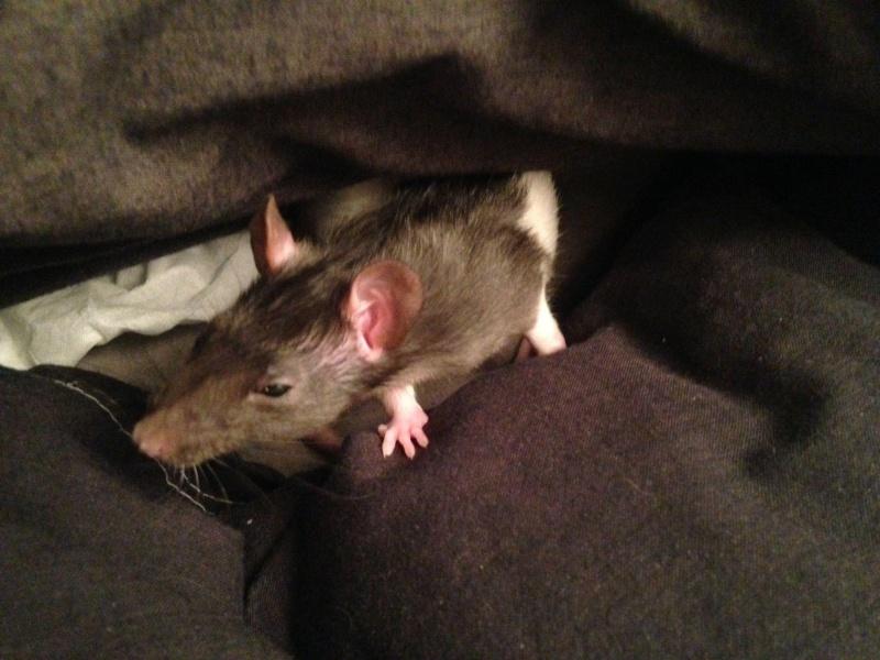 [75 et RP] 2 ratons hooded standard lisse noir 88662310