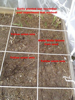 What's in the garden right now?? - Page 2 Garden12