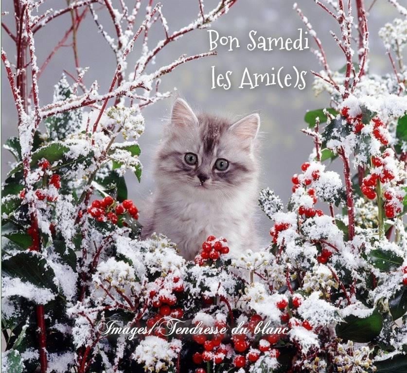 Les bonjour et bonne nuit du  1er janvier 2019 AU 1er Janvier 2020   - Page 5 Samedi11