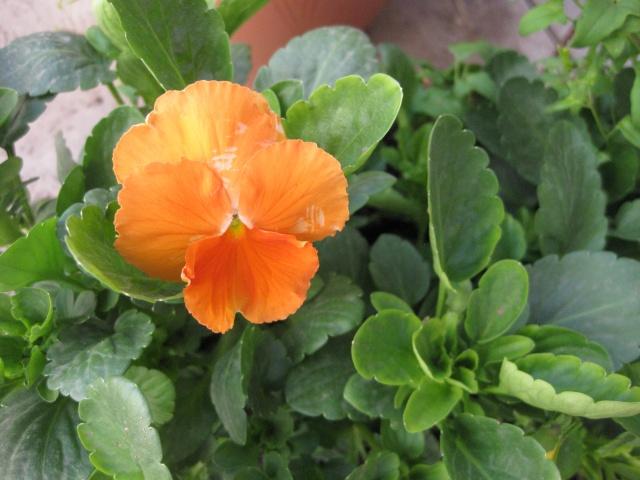 quelques fleurs  Potage11