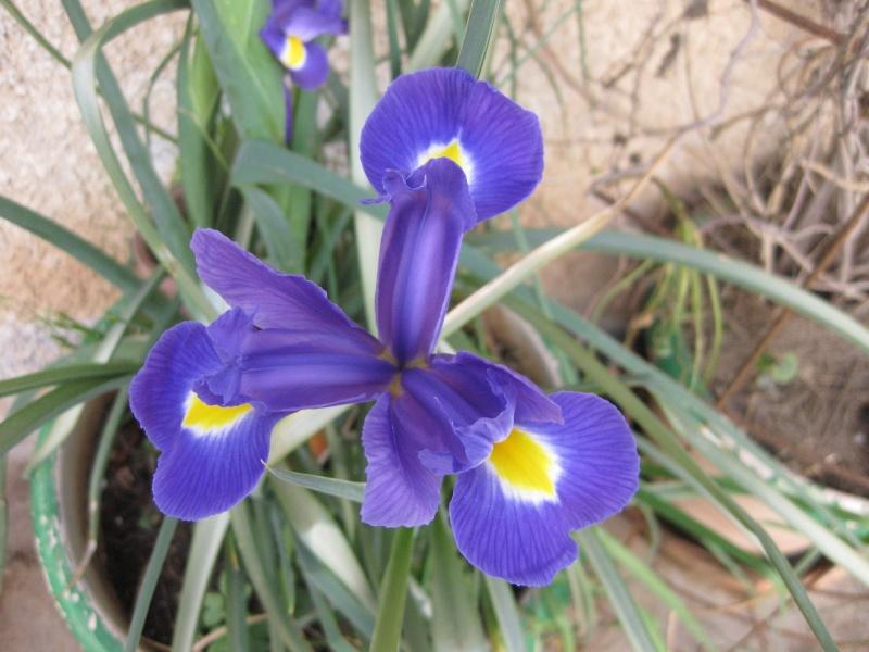 quelques fleurs  Potage12