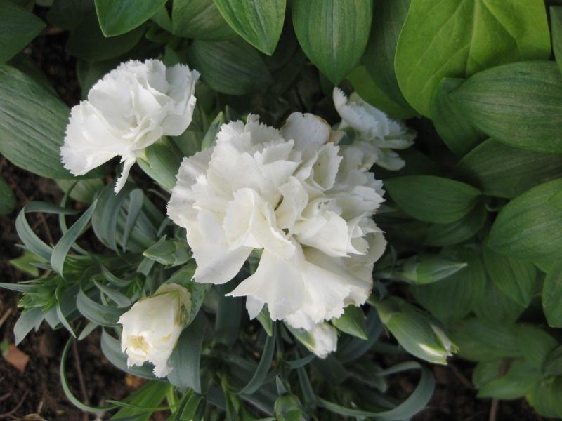 quelques fleurs  Potage13