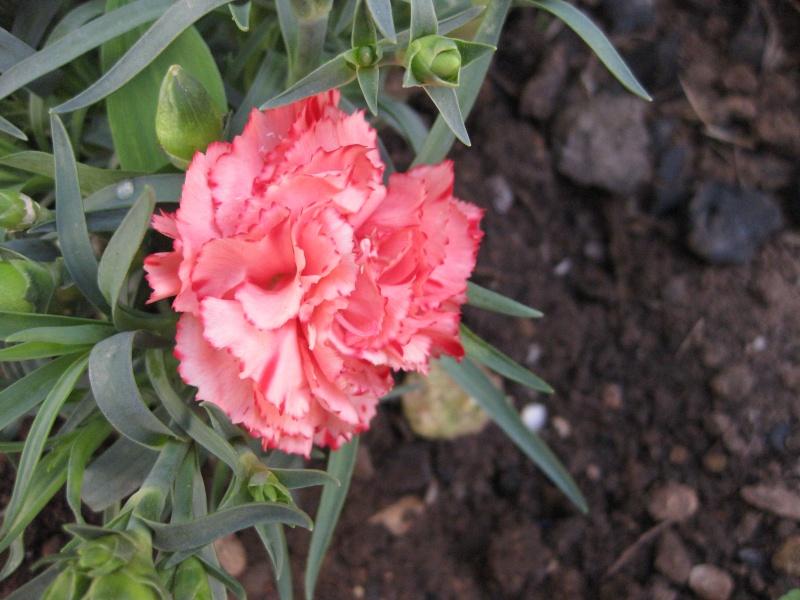 quelques fleurs  Potage14