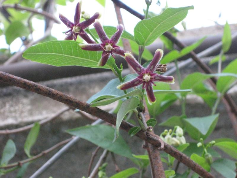 quelques fleurs  Potage24
