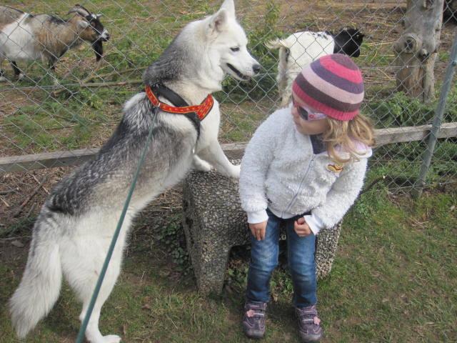 Saskia voudrait jouer avec les chèvres... 1010