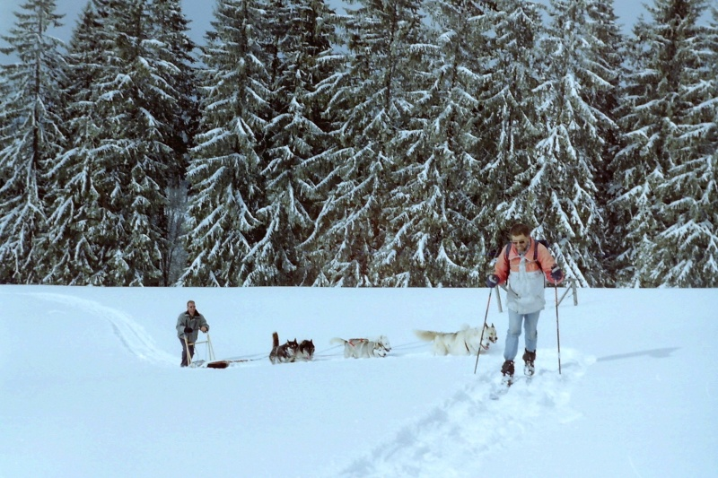 Mes plus belles images de traîneau A_ski_10