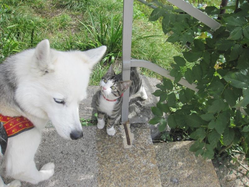 Saskia voudrait jouer avec les chèvres... Img_2312
