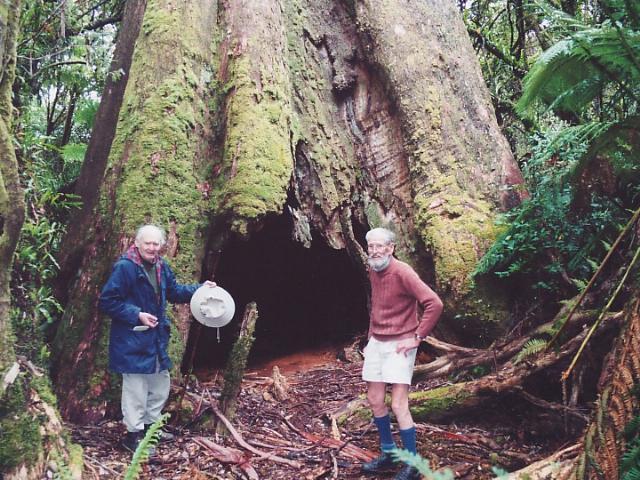 Eucalyptus  Euca_r10