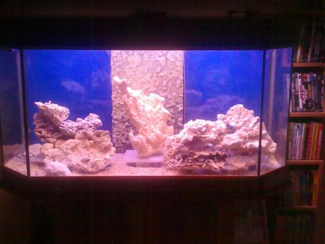 nouvel aquarium eau de mer 03122010