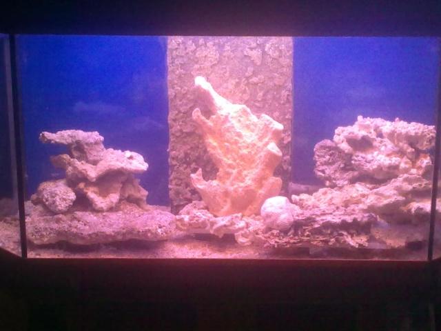 nouvel aquarium eau de mer 04122010