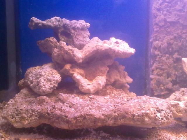 nouvel aquarium eau de mer 04122011