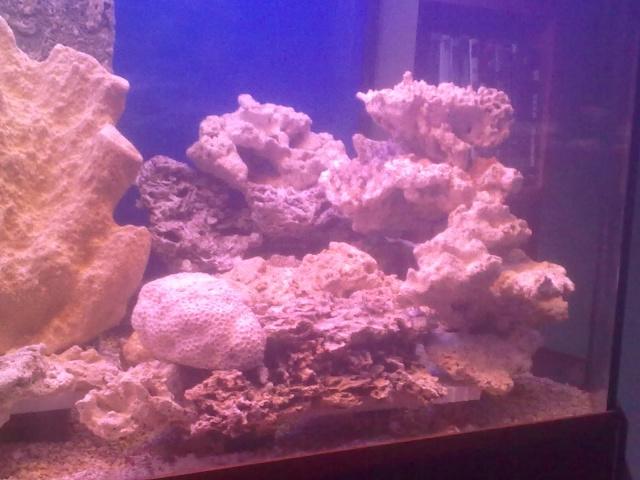 nouvel aquarium eau de mer 04122012