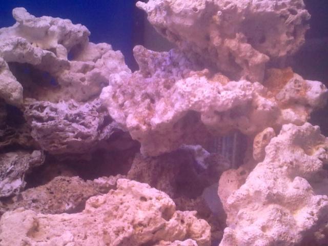 nouvel aquarium eau de mer 04122013
