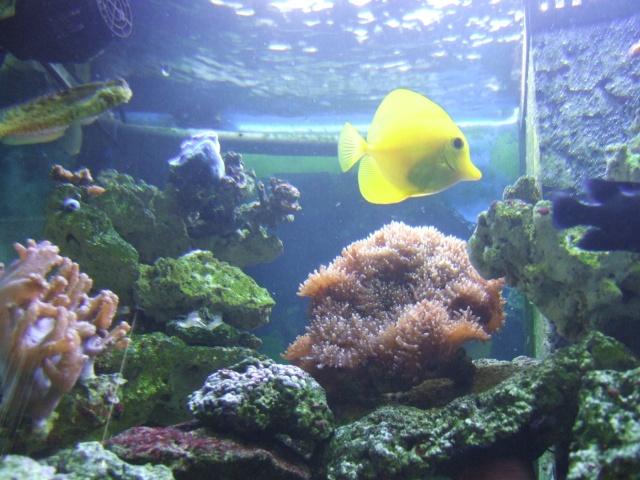 nouvel aquarium eau de mer Dscf0611