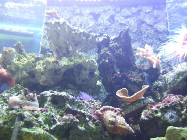 nouvel aquarium eau de mer Dscf0612