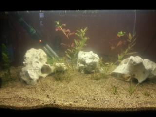 Mon petit aquarium de 54L 2013-012