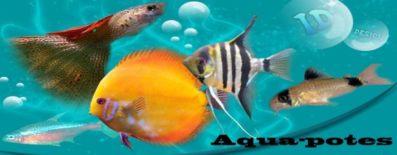 aqua-potes