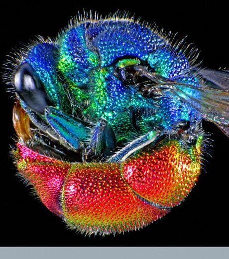 Les plus belles images de science primées aux Wellcome Image awards 2011 -ignat10