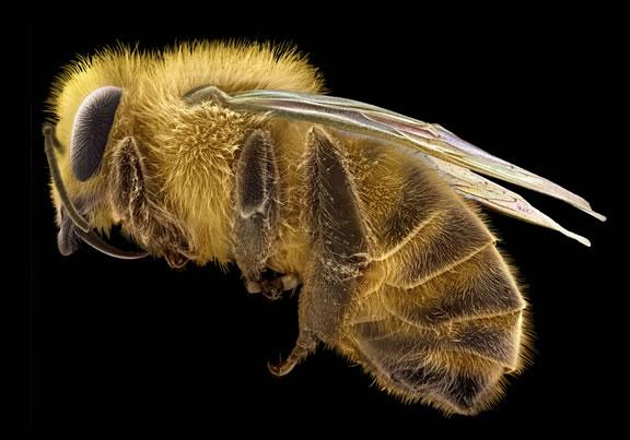 Les plus belles images de science primées aux Wellcome Image awards 2011 Wtdv0310