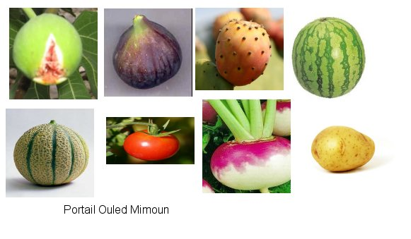 Livre  Photo - Le Passé Agricole d'Ouled Mimoun Mimoun14