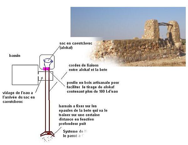 Le Passé Agricole d'Ouled Mimoun Mimoun16