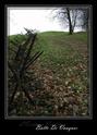 Forêt de Verdun et d'Argonne Dscf0611