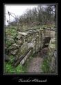 Forêt de Verdun et d'Argonne Dscf0613