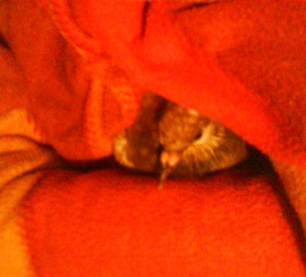 Help! My little pigeon is seriously ill! - Page 4 Dsc00011