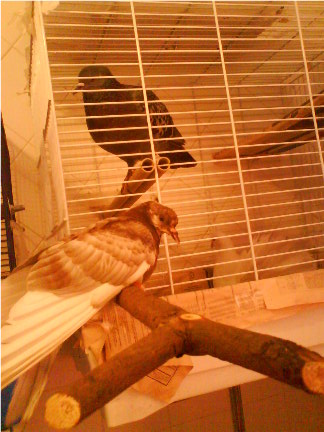 Help! My little pigeon is seriously ill! - Page 5 Dsc00012
