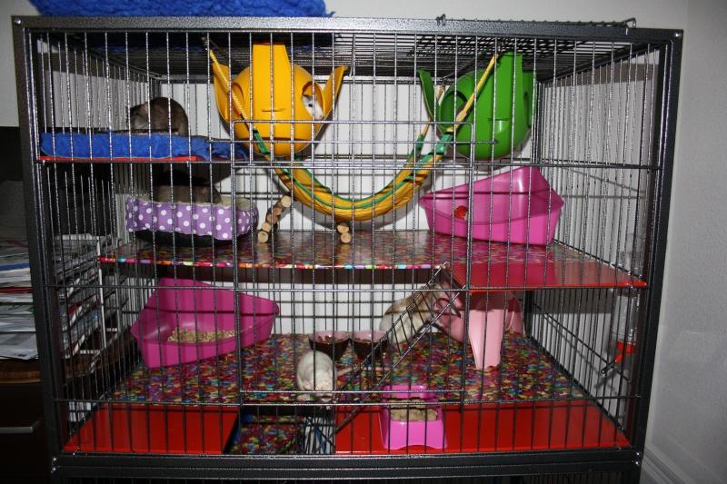 Vends grande cage en métal (54) Img_3911
