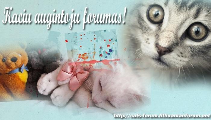 Katinų forumas