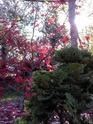feuillages, écorces et contre-jour Jardin11