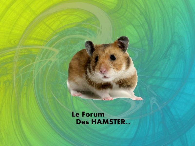 Les Hamster Hamste14