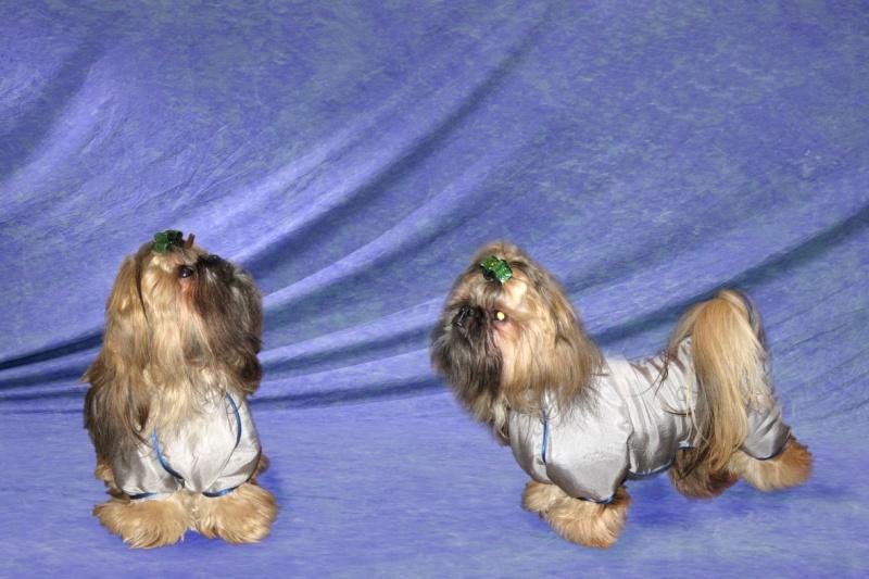 Модели собачей одежды. 810