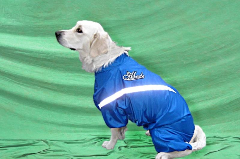 Модели собачей одежды. Dduddd10